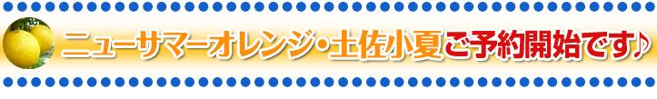 「ニューサマーオレンジ・土佐小夏ご予約開始です♪」<BR>
