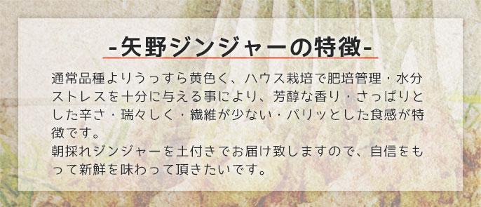 矢野ジンジャーサブ02